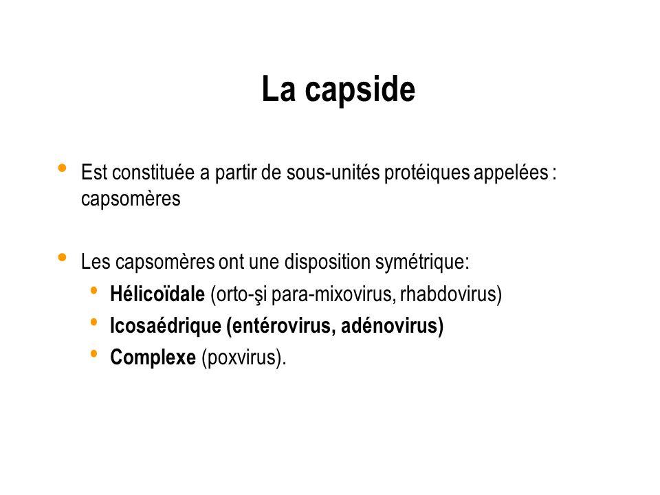 La capside Est constituée a partir de sous-unités protéiques appelées : capsomères Les capsomères ont une disposition symétrique: Hélicoïdale (orto-şi