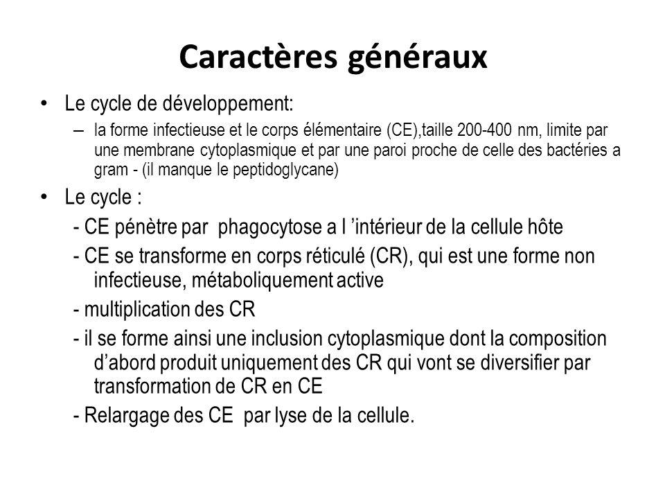 Caractères généraux Le cycle de développement: – la forme infectieuse et le corps élémentaire (CE),taille 200-400 nm, limite par une membrane cytoplas