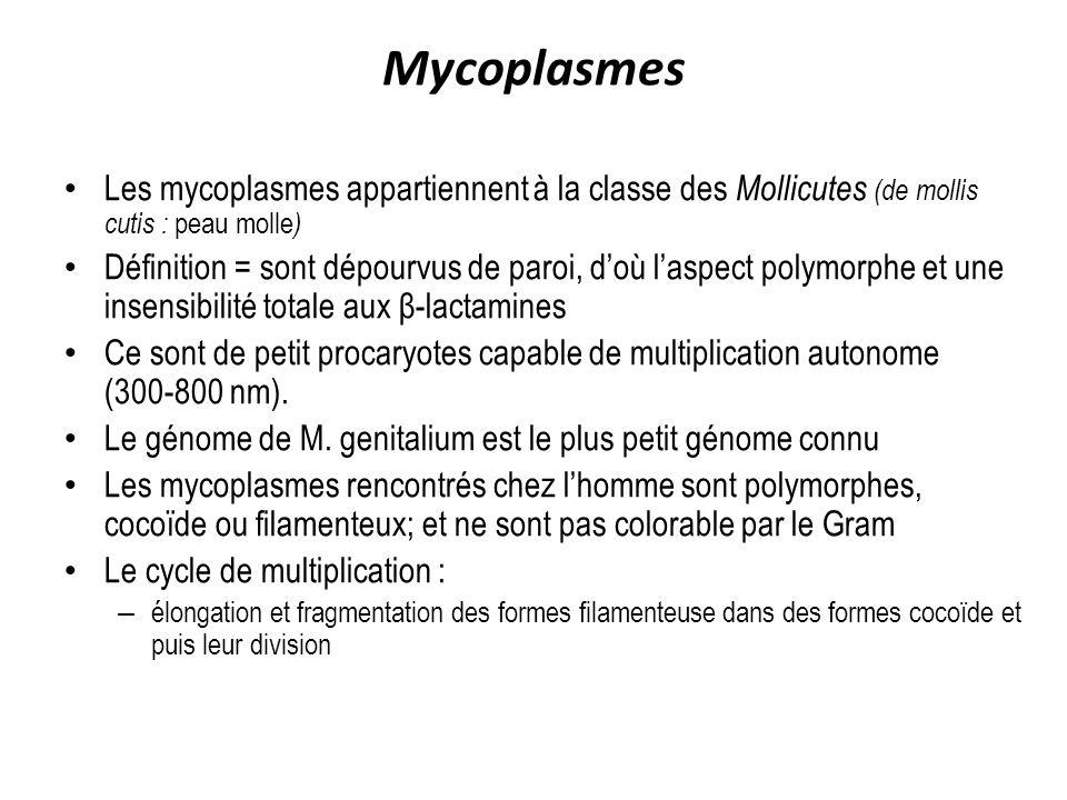 Mycoplasmes Les mycoplasmes appartiennent à la classe des Mollicutes (de mollis cutis : peau molle ) Définition = sont dépourvus de paroi, doù laspect