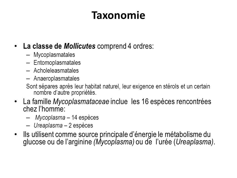 Taxonomie La classe de Mollicutes comprend 4 ordres: – Mycoplasmatales – Entomoplasmatales – Acholeleasmatales – Anaeroplasmatales Sont sépares après