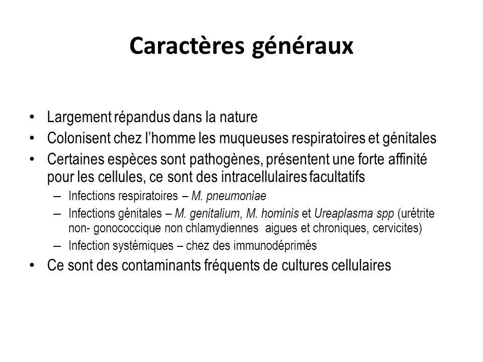 Caractères généraux Largement répandus dans la nature Colonisent chez lhomme les muqueuses respiratoires et génitales Certaines espèces sont pathogène