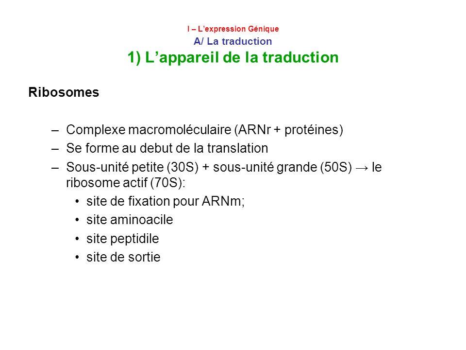 I – Lexpression Génique A/ La traduction 1) Lappareil de la traduction Ribosomes –Complexe macromoléculaire (ARNr + protéines) –Se forme au debut de l