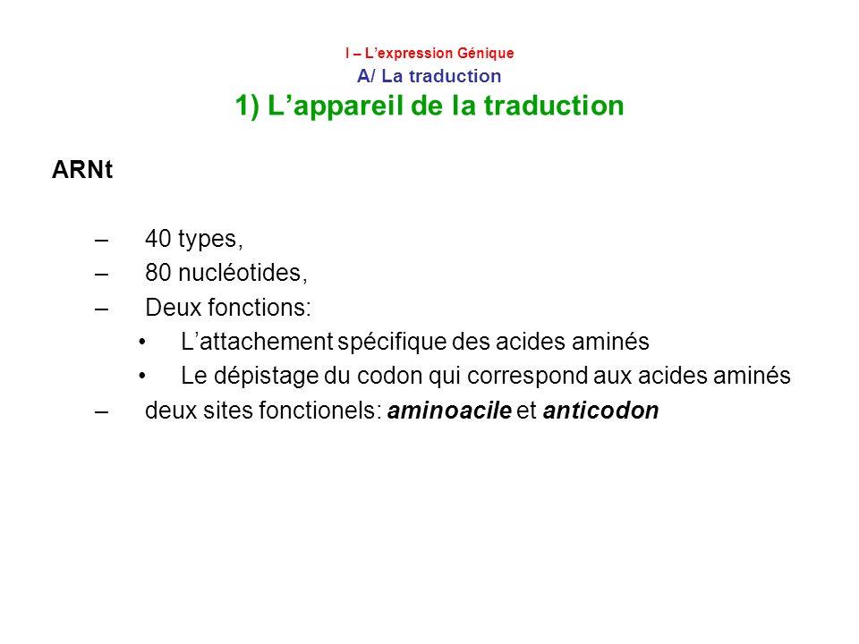 I – Lexpression Génique A/ La traduction 1) Lappareil de la traduction ARNt –40 types, –80 nucléotides, –Deux fonctions: Lattachement spécifique des a