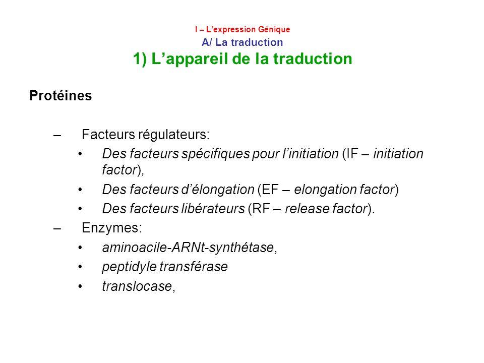 I – Lexpression Génique A/ La traduction 1) Lappareil de la traduction Protéines –Facteurs régulateurs: Des facteurs spécifiques pour linitiation (IF