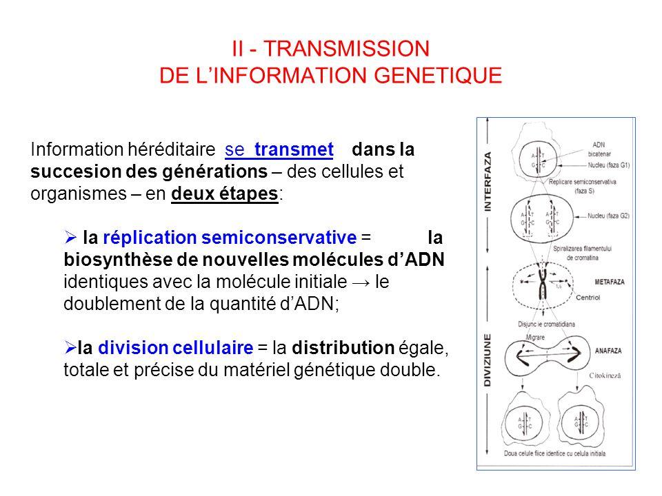 II - TRANSMISSION DE LINFORMATION GENETIQUE Information héréditaire se transmet dans la succesion des générations – des cellules et organismes – en de