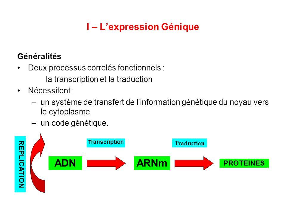 I – Lexpression Génique Généralités Deux processus correlés fonctionnels : la transcription et la traduction Nécessitent : –un système de transfert de
