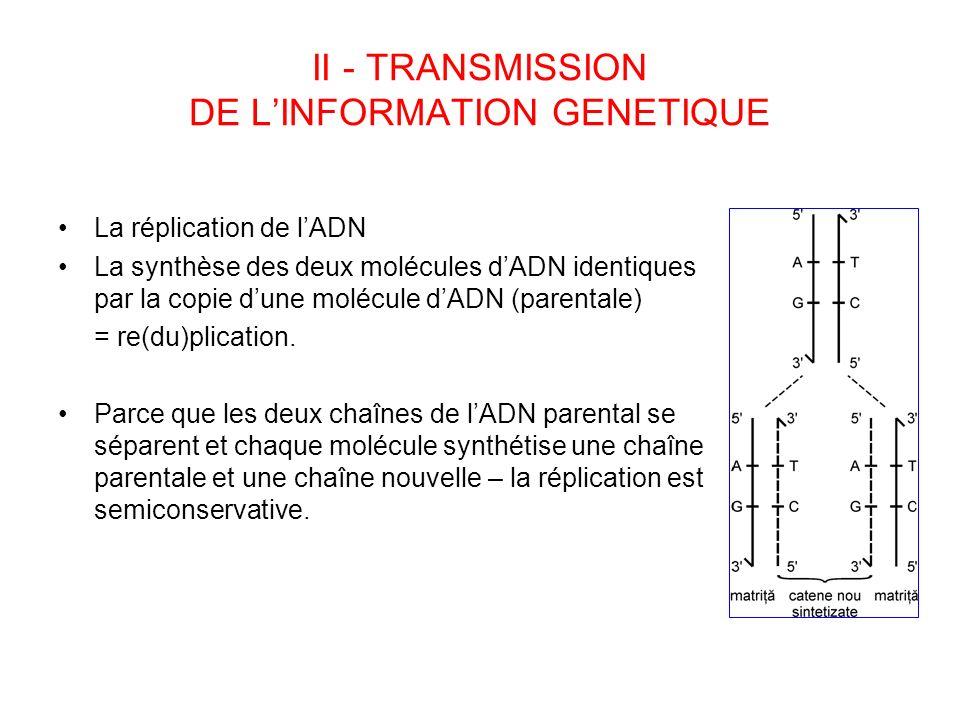 II - TRANSMISSION DE LINFORMATION GENETIQUE La réplication de lADN La synthèse des deux molécules dADN identiques par la copie dune molécule dADN (par