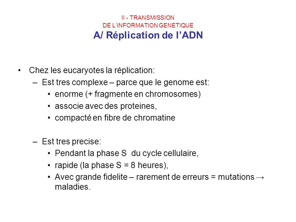 II - TRANSMISSION DE LINFORMATION GENETIQUE A/ Réplication de lADN Chez les eucaryotes la réplication: –Est tres complexe – parce que le genome est: e