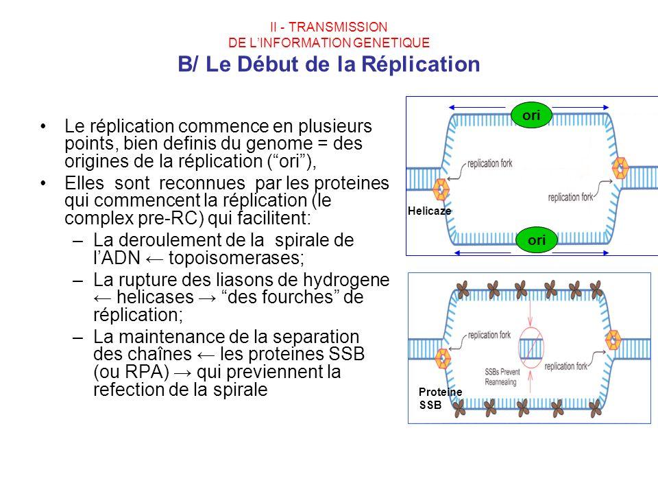 II - TRANSMISSION DE LINFORMATION GENETIQUE B/ Le Début de la Réplication Le réplication commence en plusieurs points, bien definis du genome = des or
