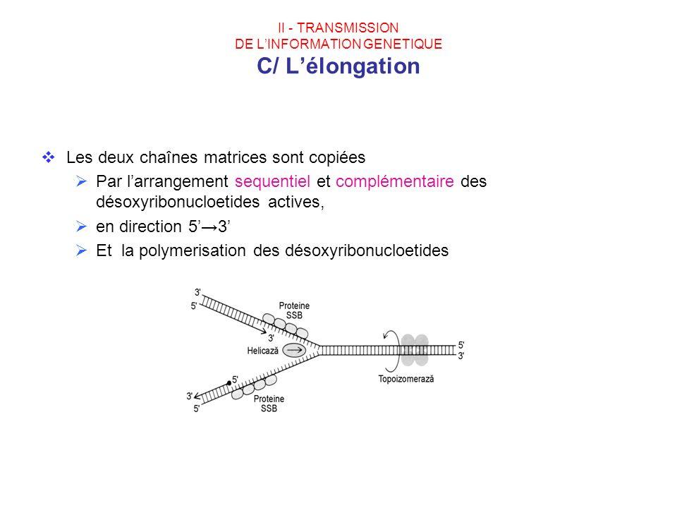 II - TRANSMISSION DE LINFORMATION GENETIQUE C/ Lélongation Les deux chaînes matrices sont copiées Par larrangement sequentiel et complémentaire des dé