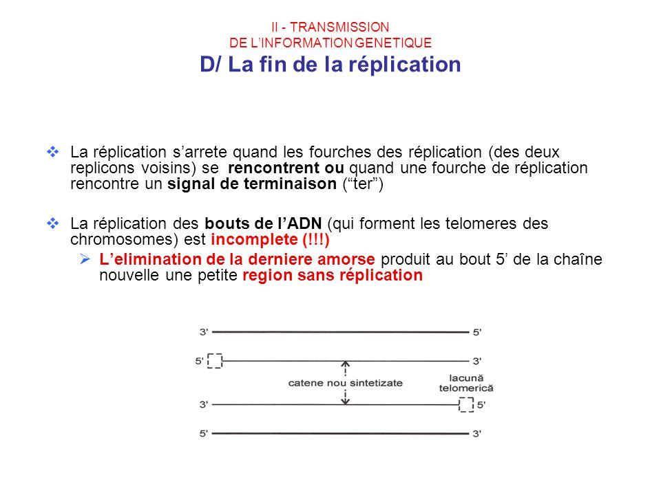 II - TRANSMISSION DE LINFORMATION GENETIQUE D/ La fin de la réplication La réplication sarrete quand les fourches des réplication (des deux replicons