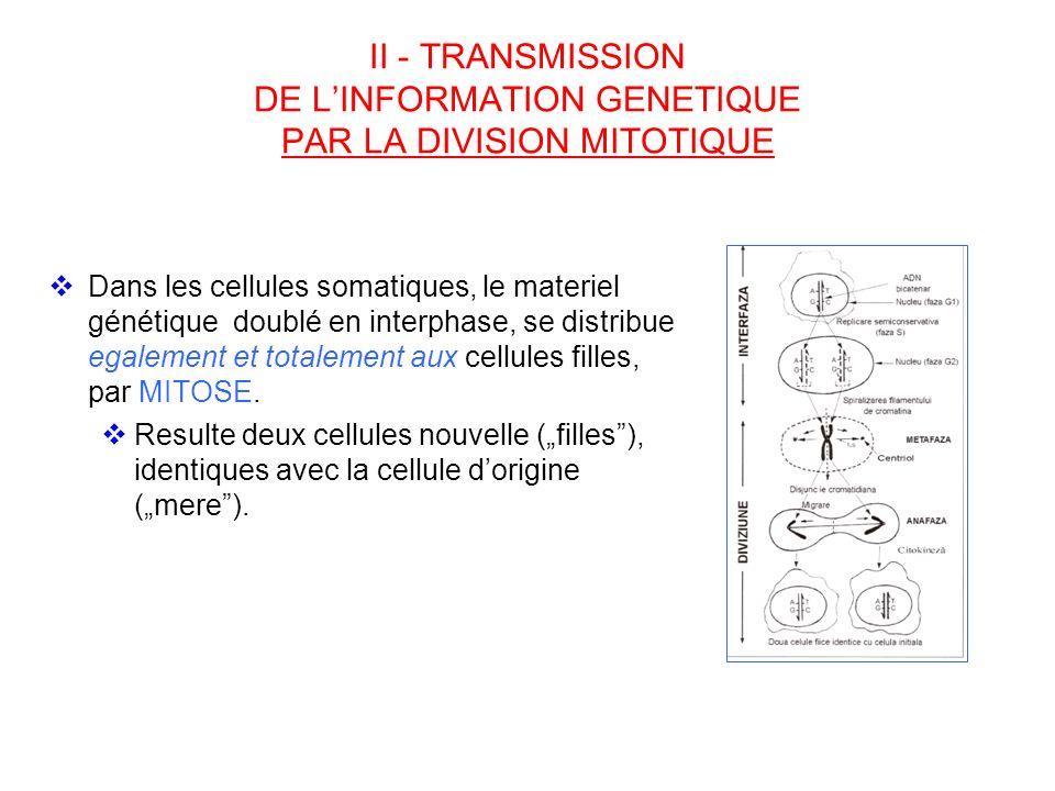 II - TRANSMISSION DE LINFORMATION GENETIQUE PAR LA DIVISION MITOTIQUE Dans les cellules somatiques, le materiel génétique doublé en interphase, se dis