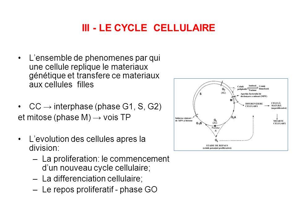 III - LE CYCLE CELLULAIRE Lensemble de phenomenes par qui une cellule replique le materiaux génétique et transfere ce materiaux aux cellules filles CC