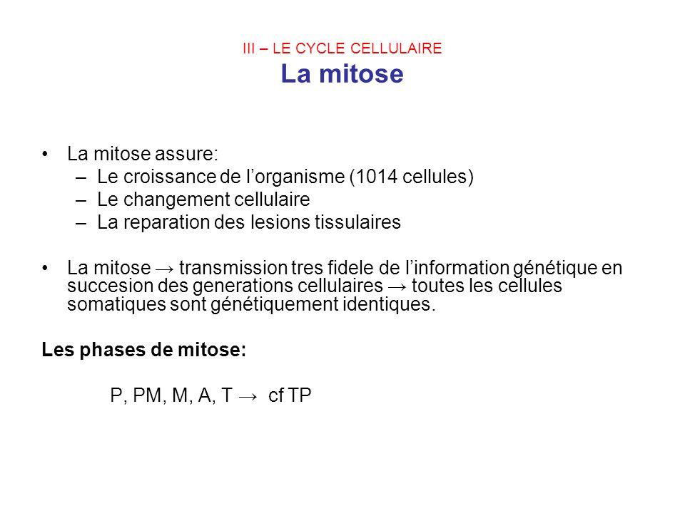 III – LE CYCLE CELLULAIRE La mitose La mitose assure: –Le croissance de lorganisme (1014 cellules) –Le changement cellulaire –La reparation des lesion