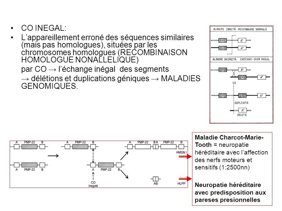 CO INEGAL: Lappareillement erroné des séquences similaires (mais pas homologues), situées par les chromosomes homologues (RECOMBINAISON HOMOLOGUE NONA