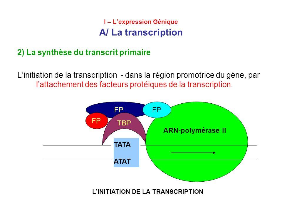 I – Lexpression Génique A/ La transcription 2) La synthèse du transcrit primaire –Lattachement de lARN-polymerase II Lattachement de lADN-hélicase scission des liaisons hydrogène.