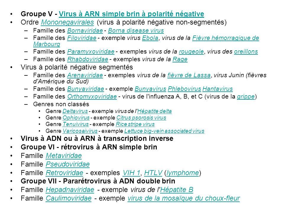 Groupe V - Virus à ARN simple brin à polarité négativeVirus à ARN simple brin à polarité négative Ordre Mononegavirales (virus à polarité négative non