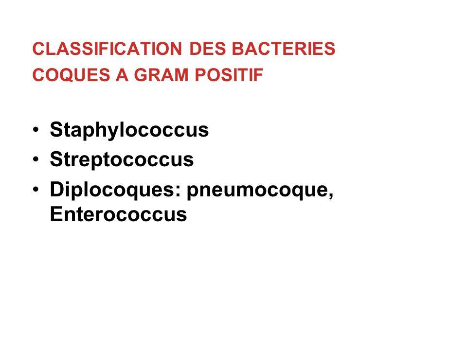 CLASSIFICATION DES BACTERIES COQUES A GRAM POSITIF Staphylococcus Streptococcus Diplocoques: pneumocoque, Enterococcus