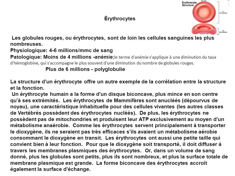 Érythrocytes Les globules rouges, ou érythrocytes, sont de loin les cellules sanguines les plus nombreuses. Physiologique: 4-6 millions/mmc de sang Pa