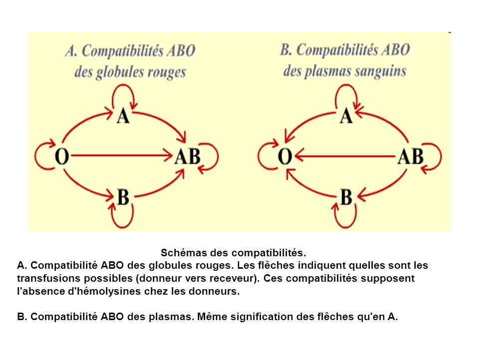 Schémas des compatibilités. A. Compatibilité ABO des globules rouges. Les flêches indiquent quelles sont les transfusions possibles (donneur vers rece