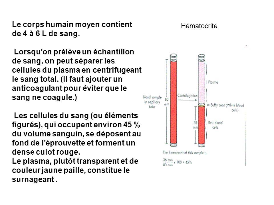 Le corps humain moyen contient de 4 à 6 L de sang. Lorsqu'on prélève un échantillon de sang, on peut séparer les cellules du plasma en centrifugeant l