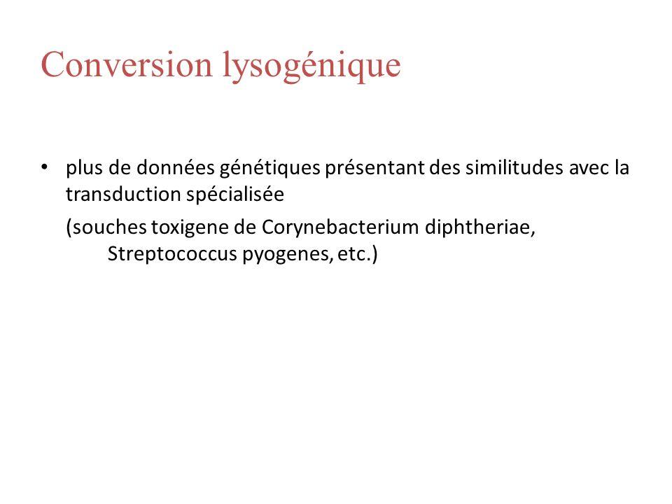 Conversion lysogénique plus de données génétiques présentant des similitudes avec la transduction spécialisée (souches toxigene de Corynebacterium dip