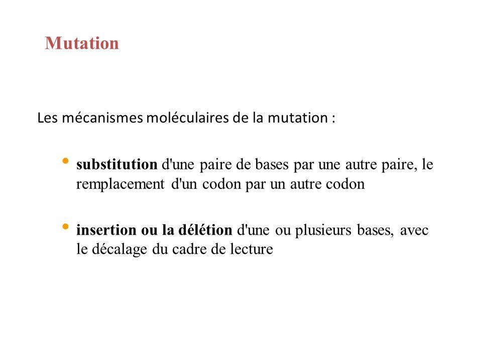 Mutation Les mécanismes moléculaires de la mutation : substitution d'une paire de bases par une autre paire, le remplacement d'un codon par un autre c