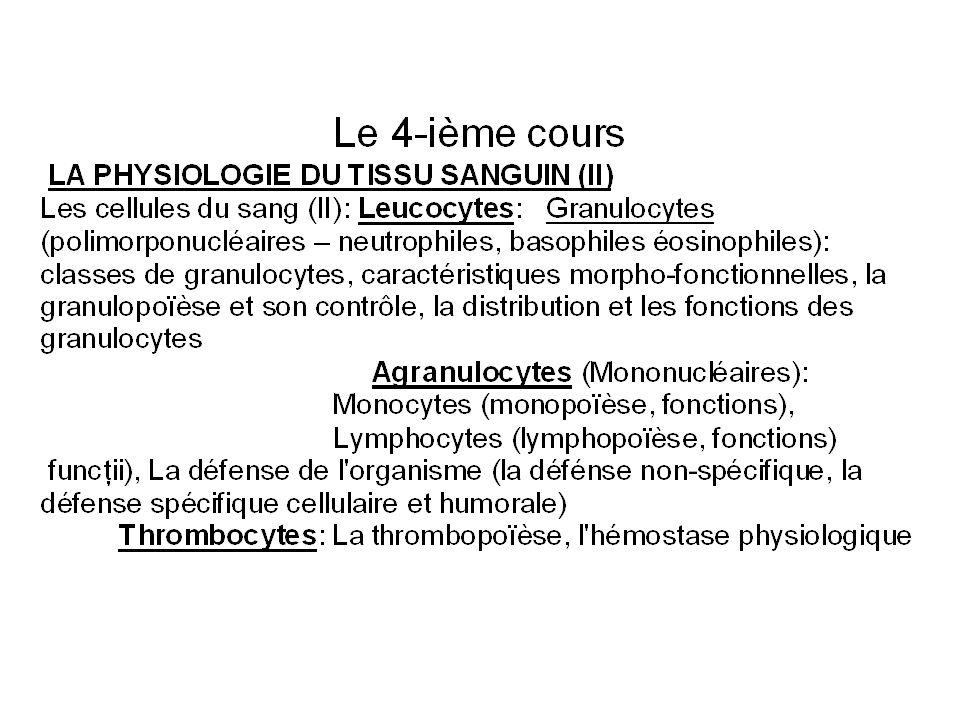 Les polynucléaires basophiles sont les moins nombreux des globules blancs (0,5 % de la population totale de leucocytes).