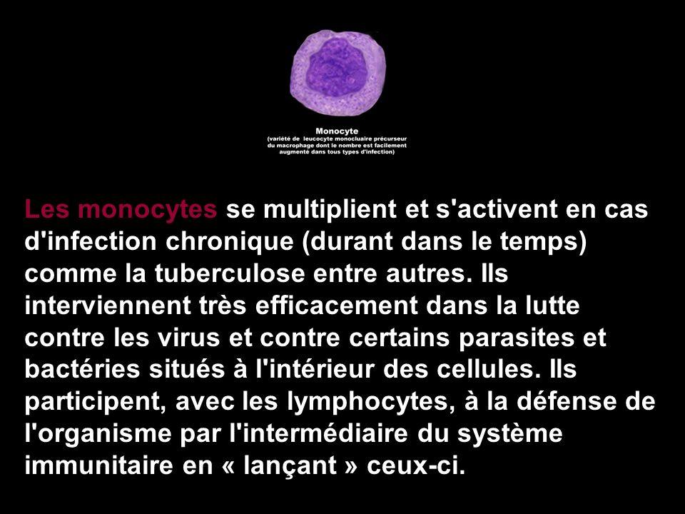 Les monocytes se multiplient et s'activent en cas d'infection chronique (durant dans le temps) comme la tuberculose entre autres. Ils interviennent tr