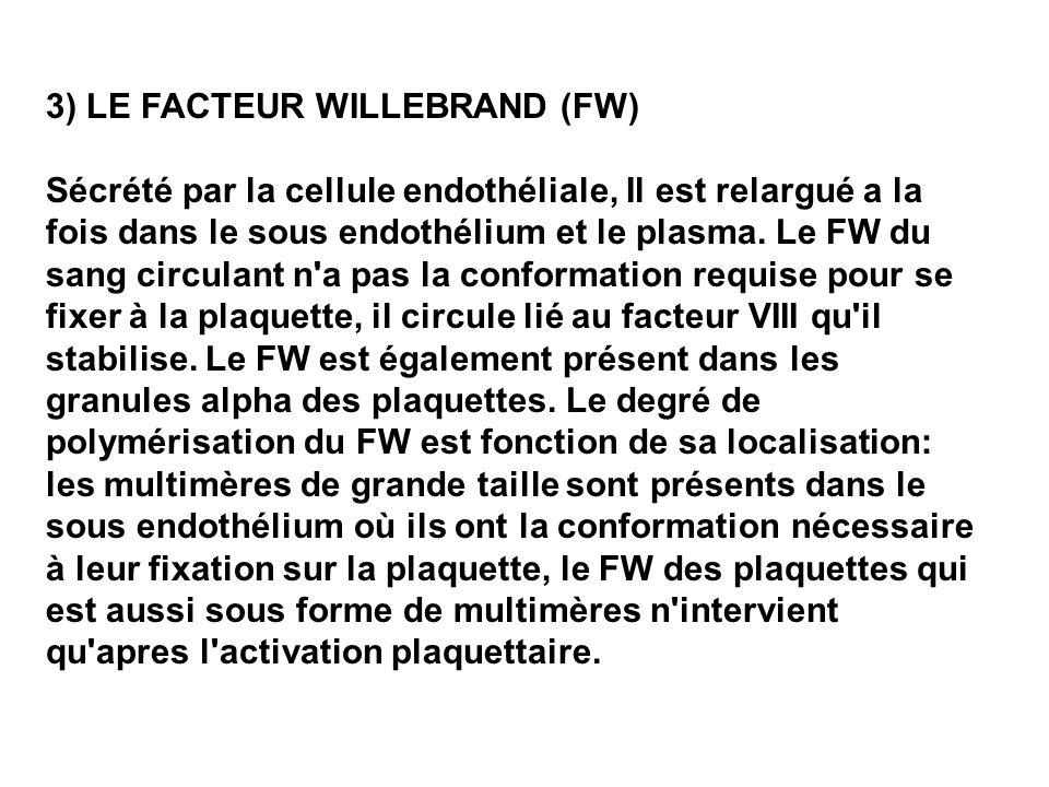 3) LE FACTEUR WILLEBRAND (FW) Sécrété par la cellule endothéliale, Il est relargué a la fois dans le sous endothélium et le plasma. Le FW du sang circ