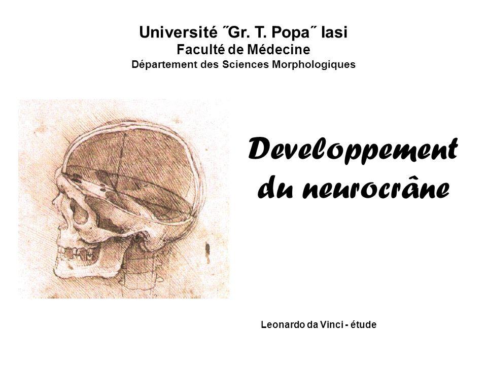 Leonardo da Vinci - étude Developpement du neurocrâne Université ˝Gr. T. Popa˝ Iasi Faculté de Médecine Département des Sciences Morphologiques