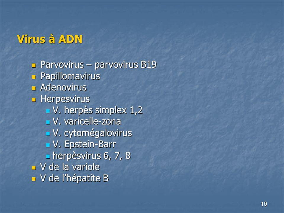 10 Virus à ADN Parvovirus – parvovirus B19 Parvovirus – parvovirus B19 Papillomavirus Papillomavirus Adenovirus Adenovirus Herpesvirus Herpesvirus V.