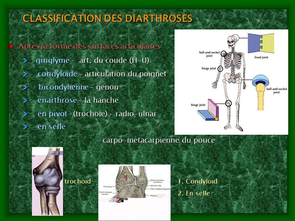 CLASSIFICATION DES DIARTHROSES Apres la forme des surfaces articulaires Apres la forme des surfaces articulaires ginglyme – art. du coude (H-U) gingly