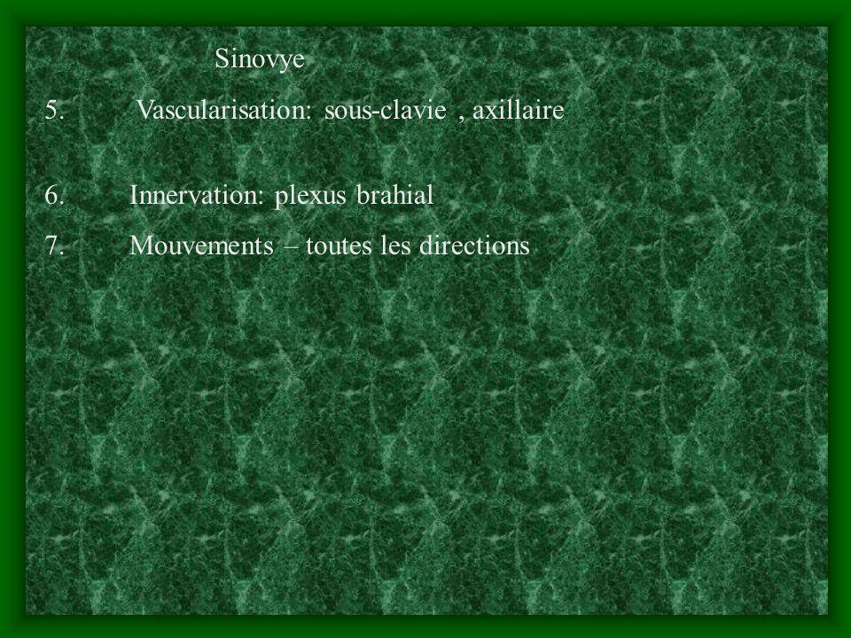 Sinovye 5. Vascularisation: sous-clavie, axillaire 6. Innervation: plexus brahial 7. Mouvements – toutes les directions