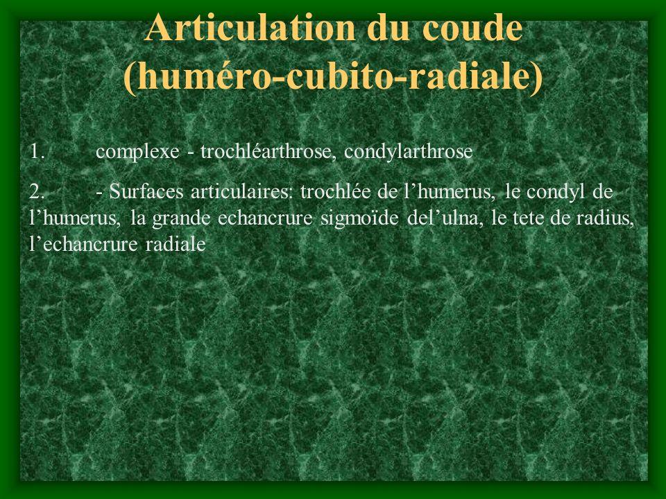 Articulation du coude (huméro-cubito-radiale) 1. complexe - trochléarthrose, condylarthrose 2. - Surfaces articulaires: trochlée de lhumerus, le condy
