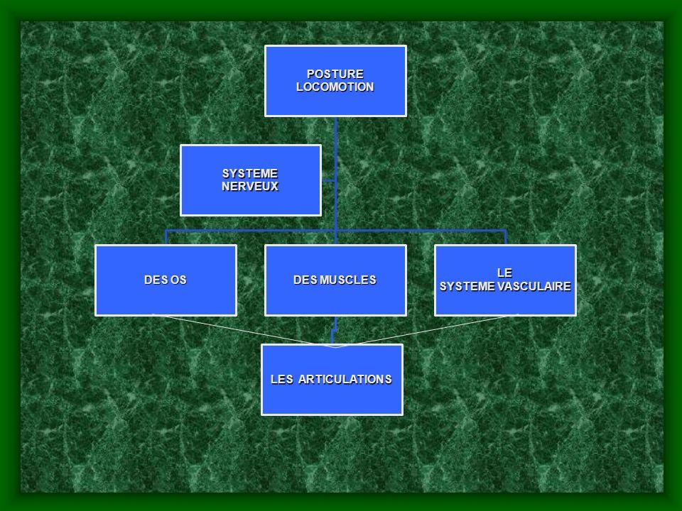 ARTICULATION DU GENOU 1.diarthroze trochlearthrose 2.