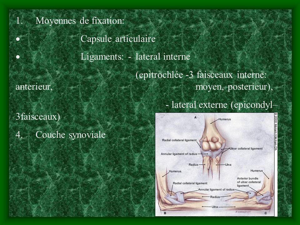 1. Moyennes de fixation: Capsule articulaire Ligaments: -lateral interne (epitrochlée -3 faisceaux interne: anterieur, moyen, posterieur), - lateral e