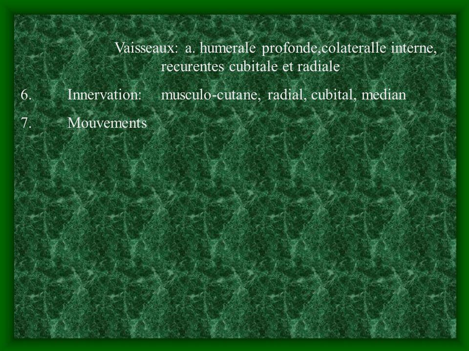 Vaisseaux: a. humerale profonde,colateralle interne, recurentes cubitale et radiale 6. Innervation: musculo-cutane, radial, cubital, median 7. Mouveme