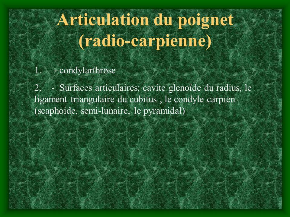 Articulation du poignet (radio-carpienne) 1. - condylarthrose 2. - Surfaces articulaires: cavite glenoïde du radius, le ligament triangulaire du cubit