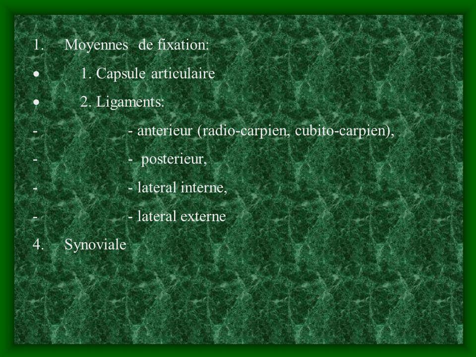 1. Moyennes de fixation: 1. Capsule articulaire 2. Ligaments: - - anterieur (radio-carpien, cubito-carpien), - - posterieur, - - lateral interne, - -