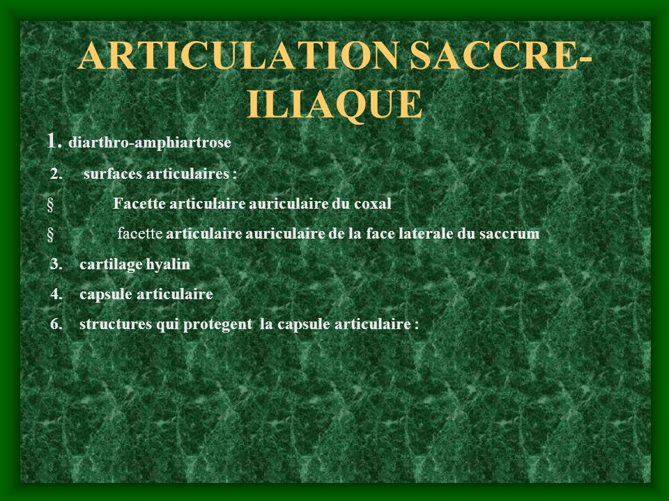 ARTICULATION SACCRE- ILIAQUE 1. diarthro-amphiartrose 2. surfaces articulaires : Facette articulaire auriculaire du coxal facette articulaire auricula