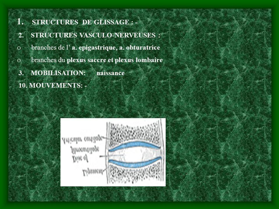 1. STRUCTURES DE GLISSAGE : - 2. STRUCTURES VASCULO-NERVEUSES : o branches de l a. epigastrique, a. obturatrice o branches du plexus saccre et plexus
