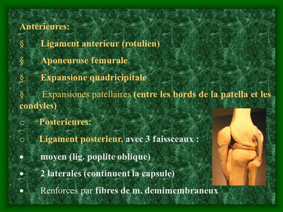 Anterieures: Ligament anterieur (rotulien) Aponeurose femurale Expansione quadricipitale Expansiones patellaires (entre les bords de la patella et les