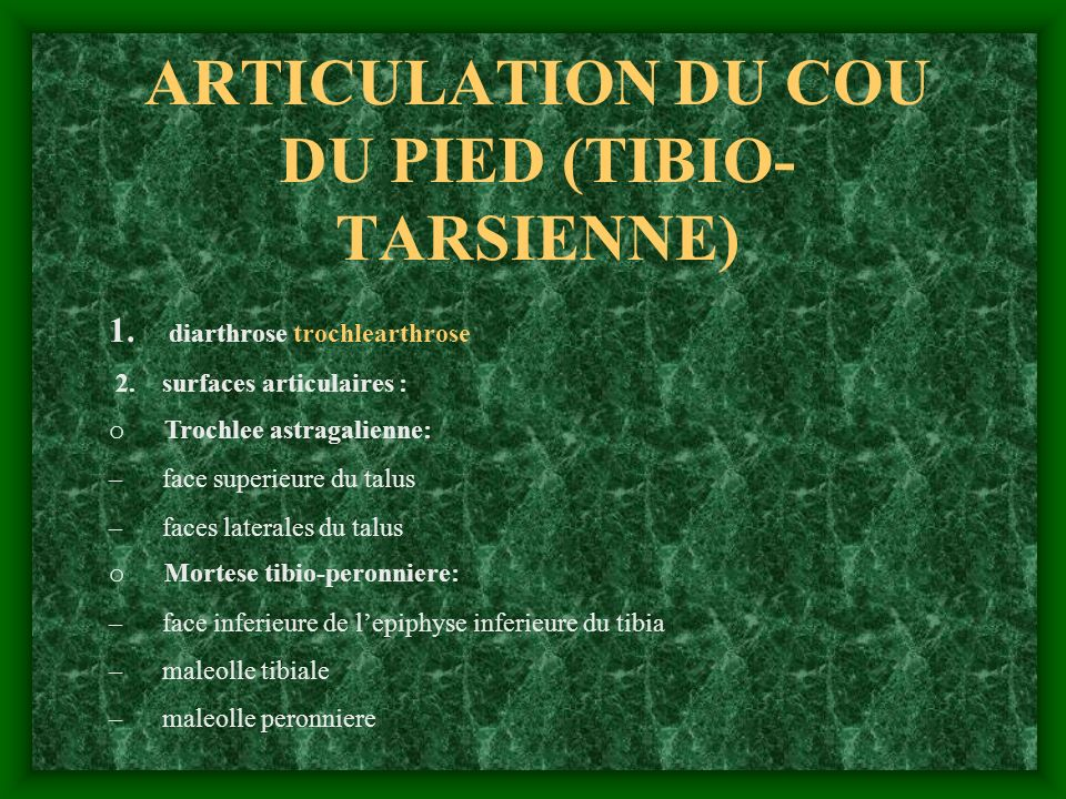 ARTICULATION DU COU DU PIED (TIBIO- TARSIENNE) 1. diarthrose trochlearthrose 2. surfaces articulaires : o Trochlee astragalienne: – face superieure du