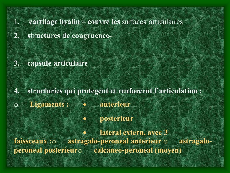 1. cartilage hyalin – couvre les surfaces articulaires 2. structures de congruence- 3. capsule articulaire 4. structuries qui protegent et renforcent