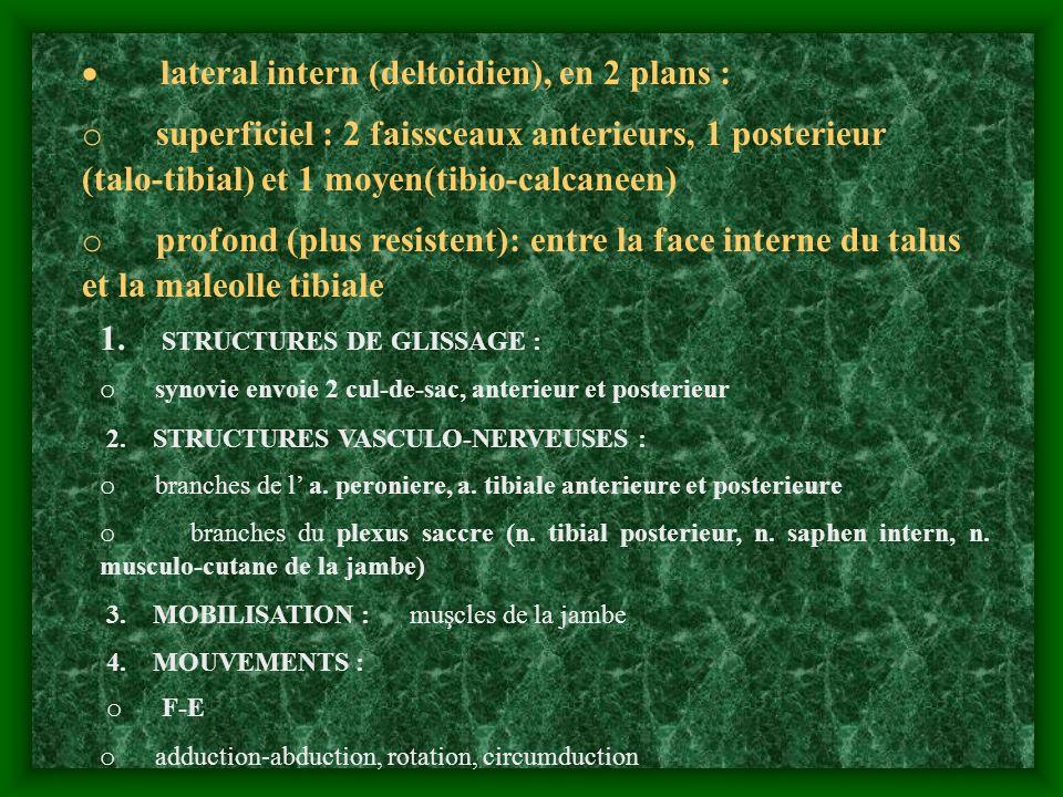 lateral intern (deltoidien), en 2 plans : o superficiel : 2 faissceaux anterieurs, 1 posterieur (talo-tibial) et 1 moyen(tibio-calcaneen) o profond (p
