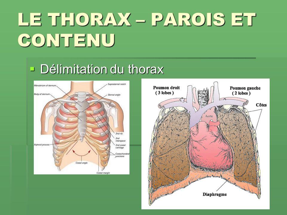 LE THORAX – PAROIS ET CONTENU Délimitation du thorax Délimitation du thorax