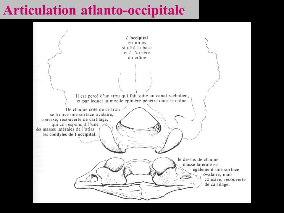 Articulation atlanto-occipitale