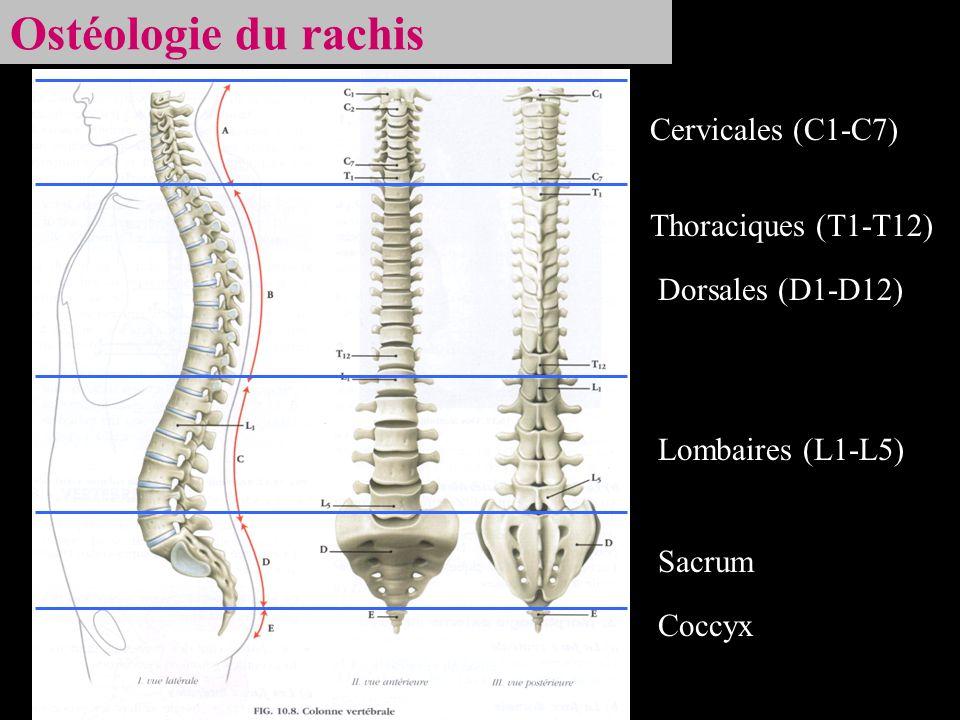 Ostéologie du rachis Cervicales (C1-C7) Thoraciques (T1-T12) Dorsales (D1-D12) Lombaires (L1-L5) Sacrum Coccyx