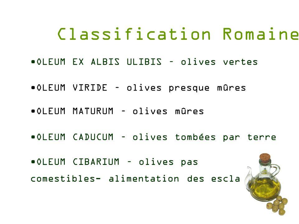 Classification Romaine OLEUM CIBARIUM – olives pas comestibles- alimentation des esclaves OLEUM EX ALBIS ULIBIS – olives vertes OLEUM VIRIDE – olives